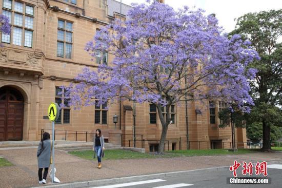 资料图:澳大利亚悉尼大学。 中新社记者 陶社兰 摄
